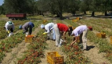 """Infortuni sul lavoro, Coldiretti: """"Il maggior calo nel settore agricoltura"""""""