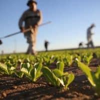 regolamento-agricoltura-biologica
