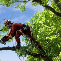 tree climbing e sicurezza sul lavoro