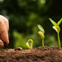 agricoltura-biologica-concimi-ammessi