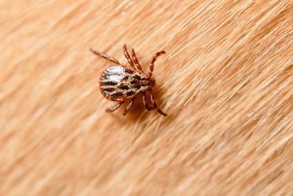 zoonosi-rischio-biologico-malattie-infettive