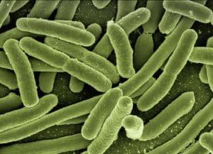 biofilm-batteri-sugli-alimenti